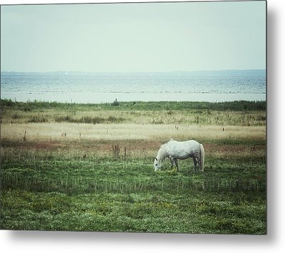Lonely Pony Metal Print by Karen Stahlros