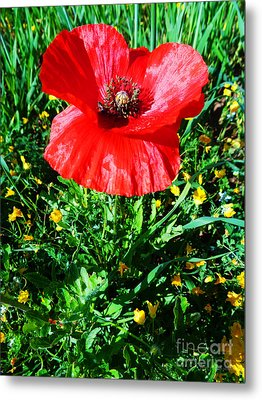 Lonely Poppy Metal Print
