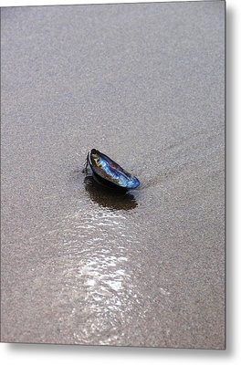 Lonely Shell Metal Print