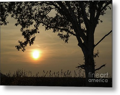 Lonely Tree At Sunset Metal Print by Kennerth and Birgitta Kullman