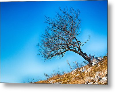 Lonely Tree Blue Sky Metal Print by Jivko Nakev