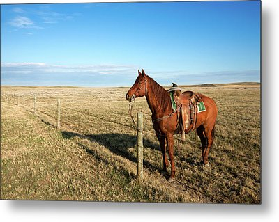 Lonesome Horse Metal Print by Todd Klassy