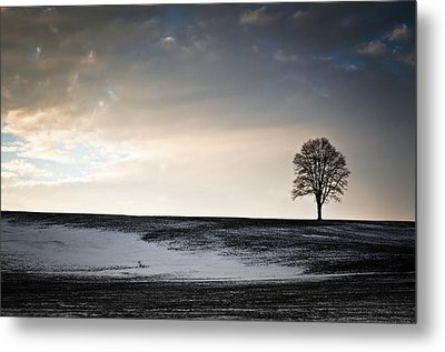 Metal Print featuring the photograph Lonesome Tree On A Hill IIi by David Sutton
