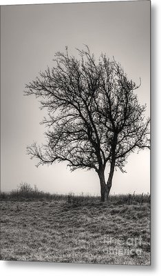 Metal Print featuring the photograph Lonesome Tree by Tamyra Ayles