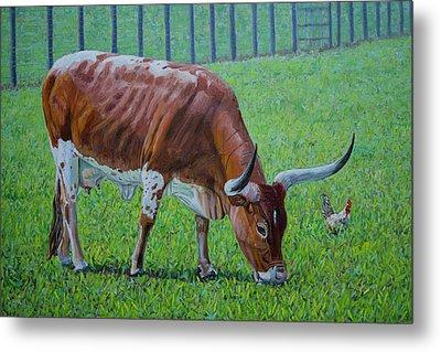 Long Horn Calf Metal Print