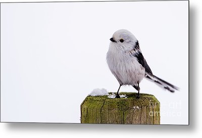 Metal Print featuring the photograph Long-tailed Tit On The Pole by Torbjorn Swenelius