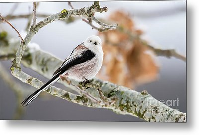 Metal Print featuring the photograph Long-tailed Tit by Torbjorn Swenelius