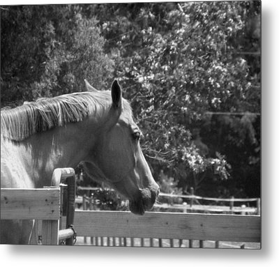 Metal Print featuring the photograph Longing by Sandi OReilly