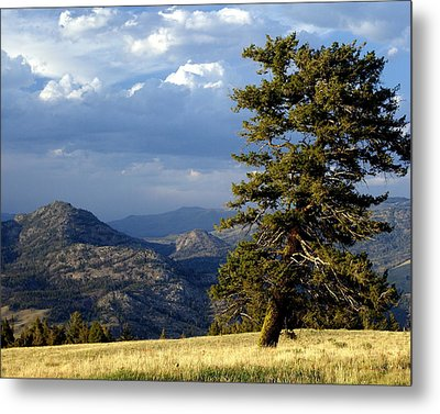 Lonly Tree Metal Print by Marty Koch