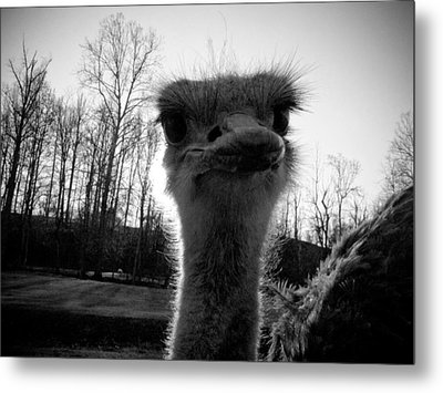 Look At Me Now Metal Print by Jessica Brawley
