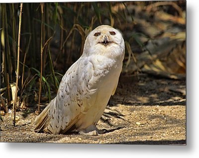 Look Into My Eyes Metal Print by Lanis Rossi