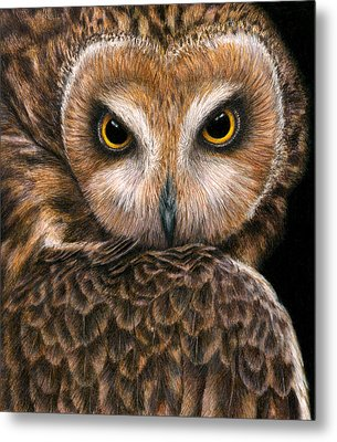 Look Into My Eyes Metal Print by Pat Erickson