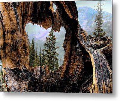 Look Into The Heart Metal Print by Jim Hill