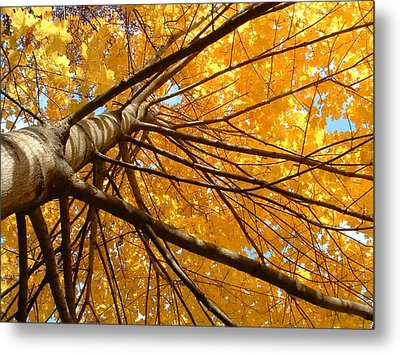 Look On The Bright Side  Metal Print by Andrea  Darlington