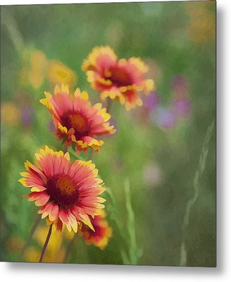 Metal Print featuring the photograph Look...a Flower by John Crothers