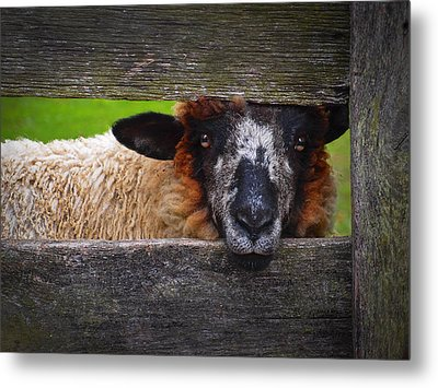 Lookin At Ewe Metal Print
