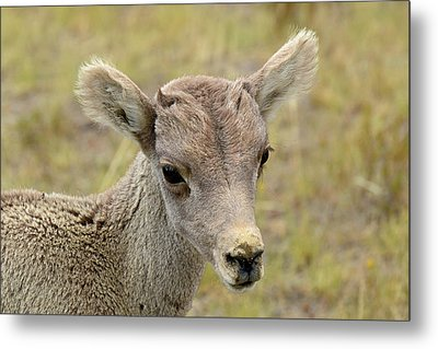 Metal Print featuring the photograph Looking At You Kid by Bruce Gourley