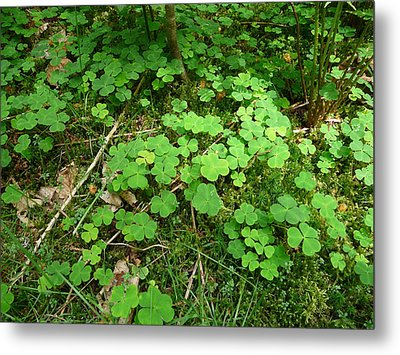 Looking For A Four-leaf Clover Metal Print by Valerie Ornstein