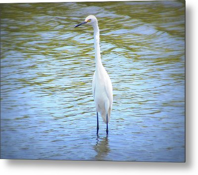 Looking For Lunch  Metal Print by Mandy Shupp