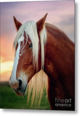 Looking For My Master Metal Print by Tamyra Ayles