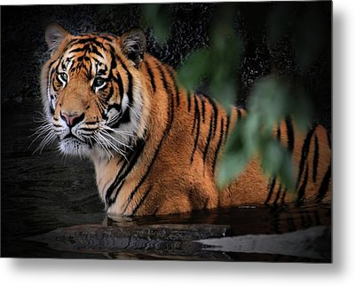 Looking Oh So Sweet Metal Print by Kym Clarke