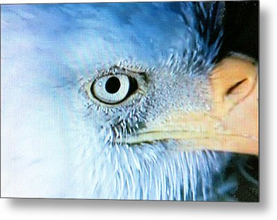 I See You Metal Print by Beverly Johnson