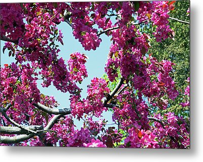 Looking Skyward Metal Print