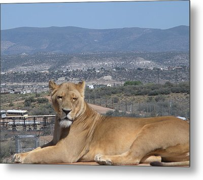 Metal Print featuring the photograph Looking The World Over by Jeanette Oberholtzer