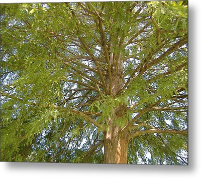Looking Up Metal Print by Diane Ferguson