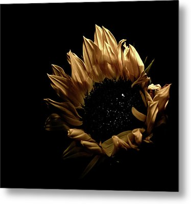 Metal Print featuring the photograph Looking Up by Sheryl Thomas