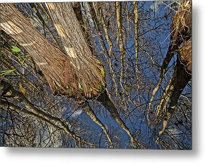 Metal Print featuring the photograph Looking Up While Looking Down by Debra and Dave Vanderlaan