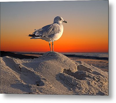 lookout Dream Metal Print by  Newwwman