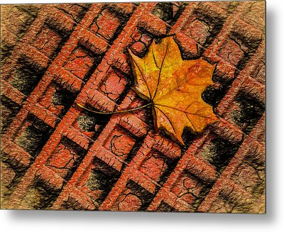 Looks Like Another Leaf Metal Print by Paul Wear