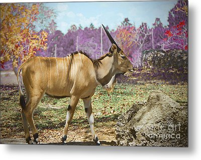 Lord Of The Derby Edition 2 Metal Print by Judy Kay