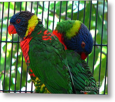 Metal Print featuring the photograph Lory by Greg Patzer