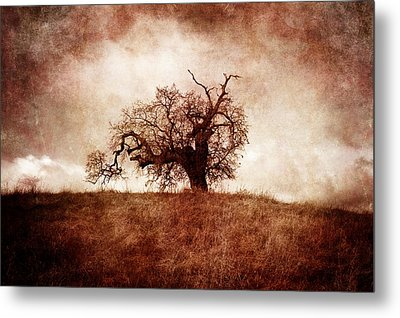 Lost And Wandering Metal Print by Laura Iverson