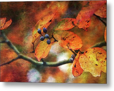 Lost Autumns Beauty 6570 Ldp_2 Metal Print
