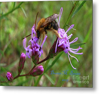 Metal Print featuring the photograph Lost Treasures  by Donna Brown