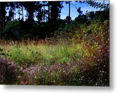 Lots Of Weeds Metal Print by Joseph G Holland