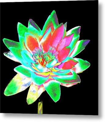 Lotus 4 Metal Print by Ann Tracy