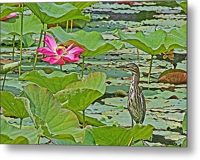Lotus Blossom And Heron Metal Print by HH Photography of Florida