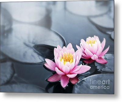 Lotus Blossoms Metal Print by Elena Elisseeva