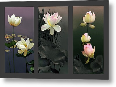 Lotus Collection II Metal Print