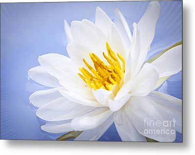 Lotus Flower Metal Print