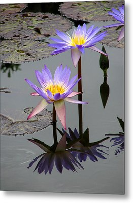 Lotus Reflection 4 Metal Print by David Dunham