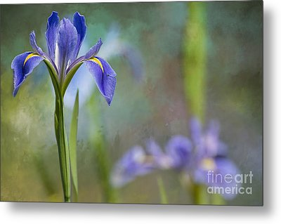 Metal Print featuring the photograph Louisiana Iris by Bonnie Barry