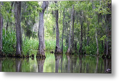 Louisiana Swamp 5 Metal Print by Inspirational Photo Creations Audrey Woods