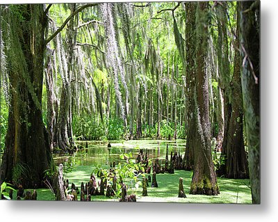 Louisiana Swamp Metal Print by Inspirational Photo Creations Audrey Woods