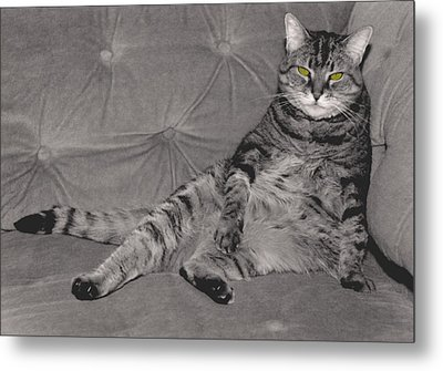 Lounge Cat Metal Print by Joy McKenzie