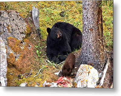 Lounging And Feasting Metal Print by Adam Jewell